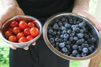tomato blueberry