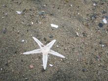 海辺のヒトデ
