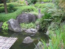 池で亀発見!