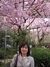 麻衣ちゃんと桜