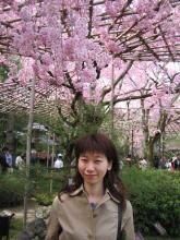 ぴのこと桜