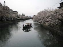 舟から花見