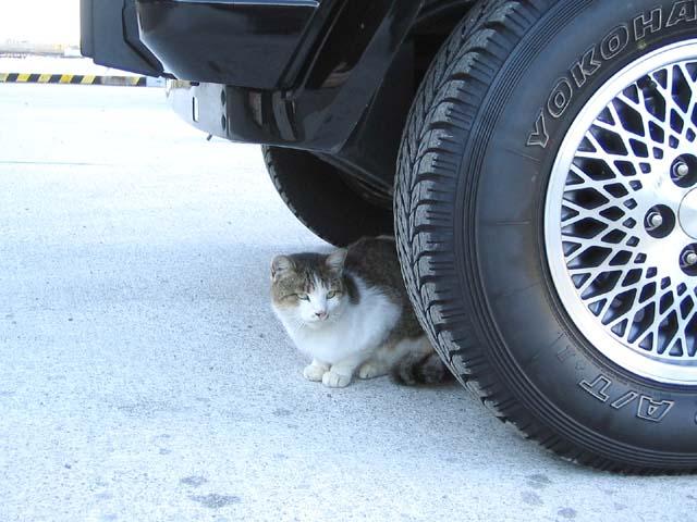 猫とタイヤ