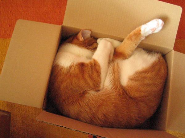 箱入りレオ