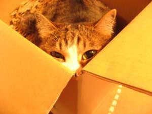 猫あいさつ
