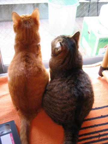 チャビとレオ